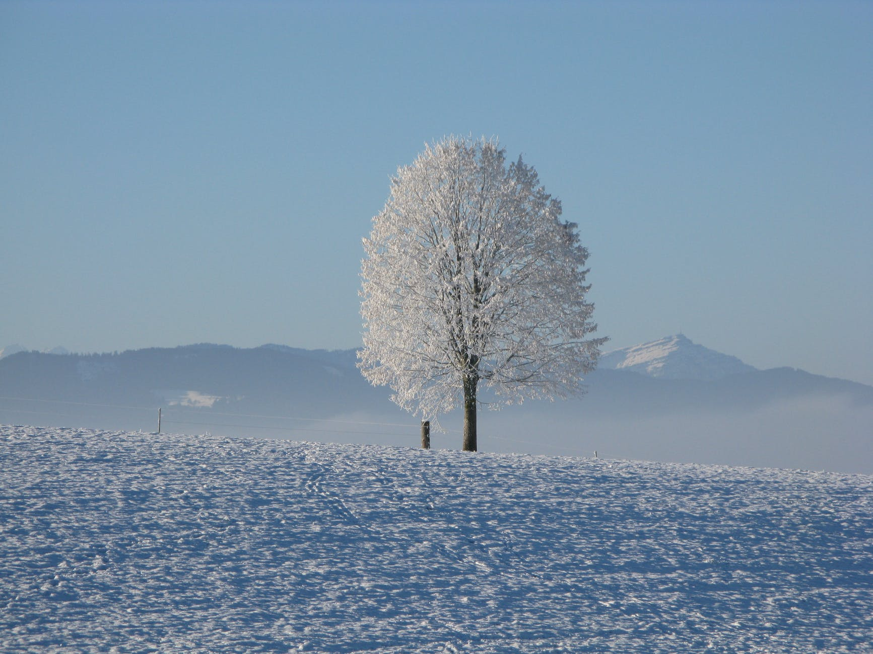 lone tree surrounded by snowcap mountain under blue sky